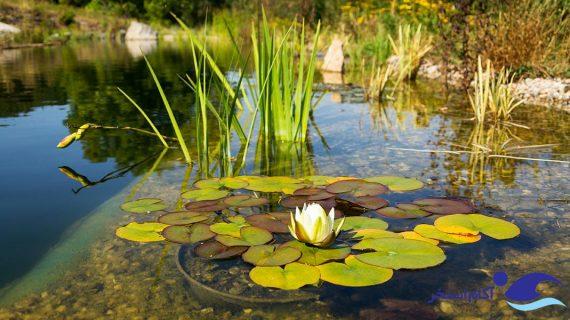 استخر طبیعی چیست ؟ مزایا و معایب